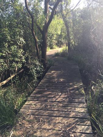 Ferntree Gully, ออสเตรเลีย: Peaceful spot