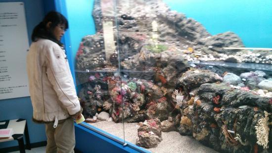 Manazuru Shell Museum