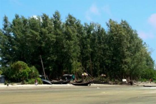 Jhau Bon, Kuakata