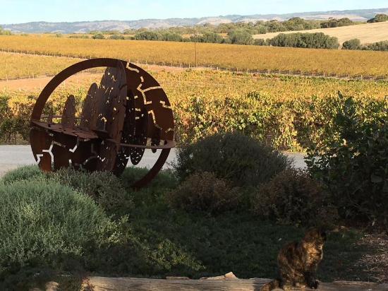 Макларен-Вейл, Австралия: Spot Cleo the winery cat