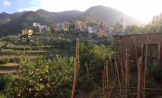 B&B Casa vacanze il Gatto: Vue depuis l'appartement avec ses citronniers