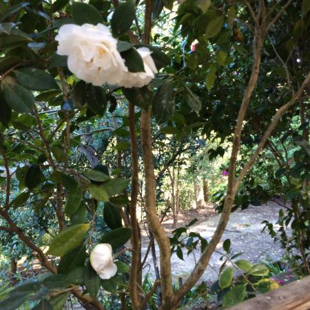 Lisgar Gardens - Hornsby