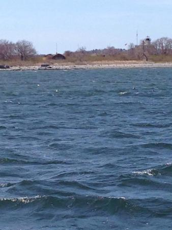 Save The Bay Seal Watch & Nature Cruises: photo0.jpg
