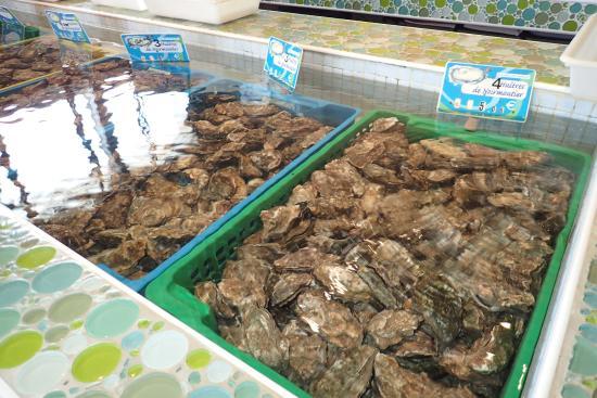 La Gueriniere, Francia: Les huitres directement sorties du vivier