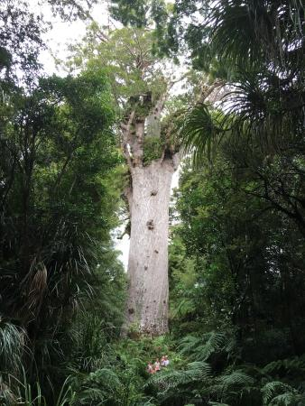 Waipoua Forest Kauri Tour - Mydo New Zealand: photo0.jpg