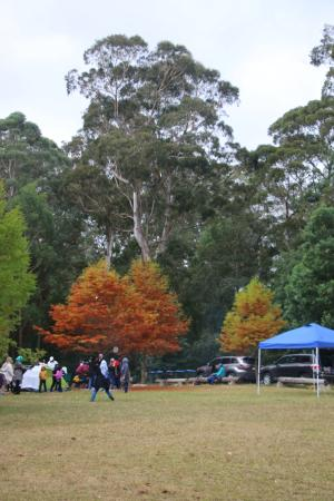 Mt Wilson, Australia: Play games, family get together