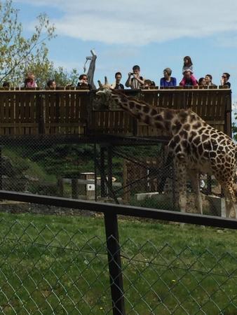 Ardeche, Frankrike: Peaugres Safari Parc