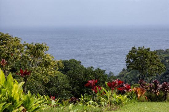 Maui Garden Of Eden Botanical Gardens Arboretum