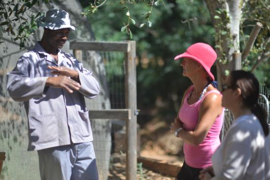 The Hydro at Stellenbosch: Tours in Permaculture Garden