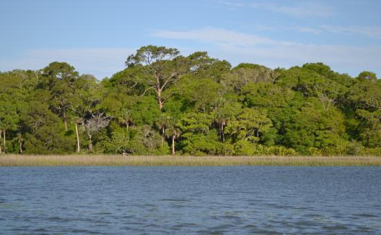 Fernandina Beach, FL: SUP Amelia Island at Simpson Creek