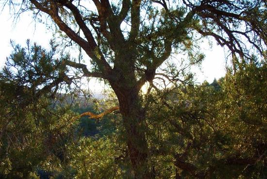 Sedona Cathedral Hideaway: Sun behind the tree outside our room