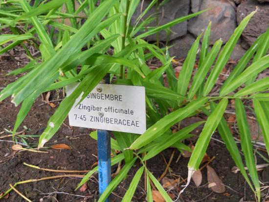 Saint-Gilles-Les-Bains, Reunión: Jardin d'Eden - Gingembre avec panneau