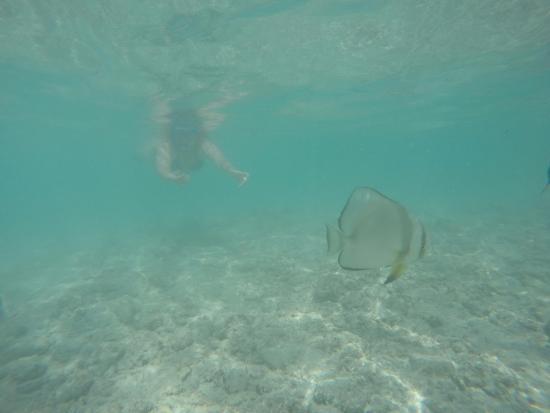 Praslin, Seychellerna: Snorkeling, at Grand Soeur Island