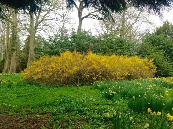 Bedale, UK: Wonderful Spring day spent at this beautiful place