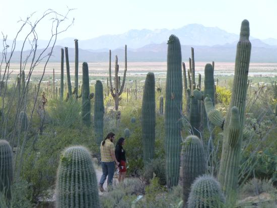 Saguaro National Park West Picture of Rincon Mountain Visitor