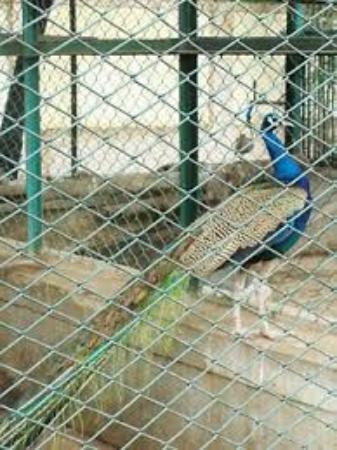 Nisargakavi Bahinabai Chaudhary Zoo照片
