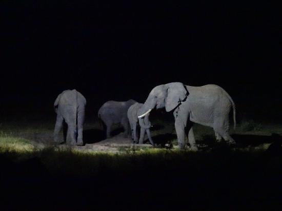 Hwange, Zimbabwe: photo5.jpg