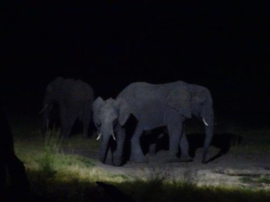 Hwange, Zimbabwe: photo6.jpg