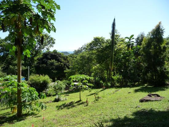 Portobelo, Panama: Garden view over the Caribbean