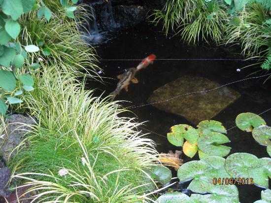 Annie's Cottage: Small pond in courtyard.