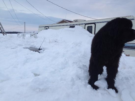 Cape Traverse, Canadá: Charlie Bear the owners dog. Trailer within 10ft of cottages in VERY poor shape. Detritus everyw