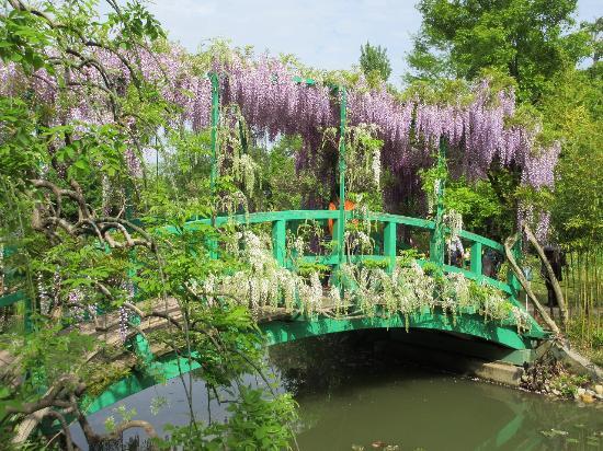 Hamanako Garden Park : フジ 4月下旬 花の美術館