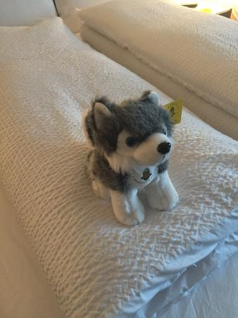 Watertown Hotel - A Piece of Pineapple Hospitality: Cute little stuffed pup is extra, but part of the proceeds go to the humane society.
