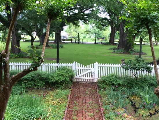 Cane River Creole National Historical Park: Live Oaks at Oakland Plantation