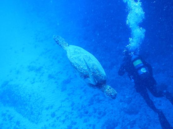 Underwater Oahu : Yeah a turtle came to visit us