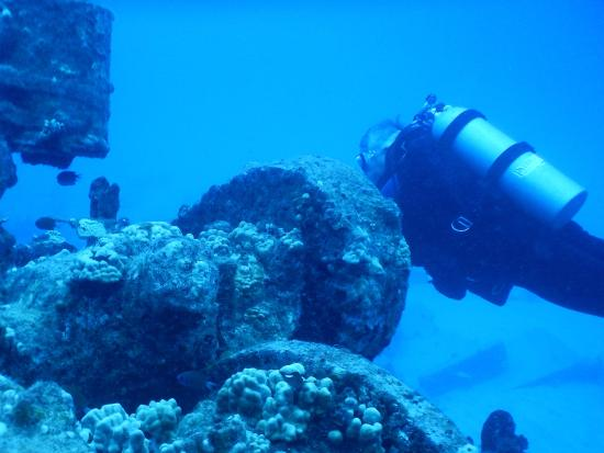 Underwater Oahu : The wreck (the structure, not the diver)