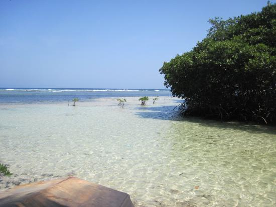 IZE Belize: View of the opposite side of the island, looking past mangroves toward fore reef