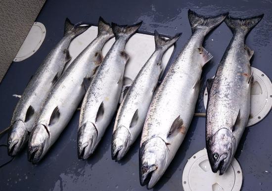 Salmon Eye Charters