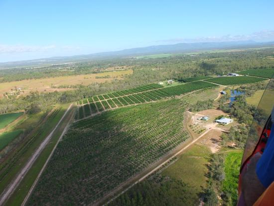 Mareeba, Australia: Jaques Coffee from Gyrocopter