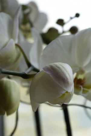 Deko Orchidee Picture Of Wirtshaus Am See Bregenz Tripadvisor