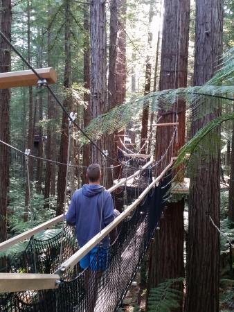 Роторуа, Новая Зеландия: Redwoods Treewalk
