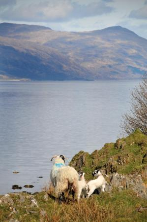 Port Appin, UK: Coastal walk on Lismore - a must do for every visitor!