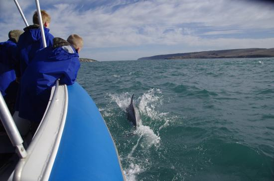 Victor Harbor, Australia: My Grandsons and one of the many dolphins following the boat.
