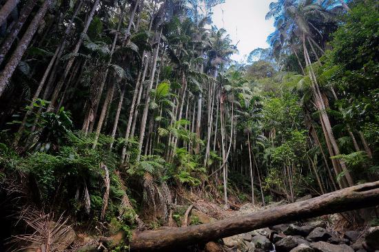 North Tamborine, Австралия: Tamborine Rainforest Skywalk - rainforest around the creek