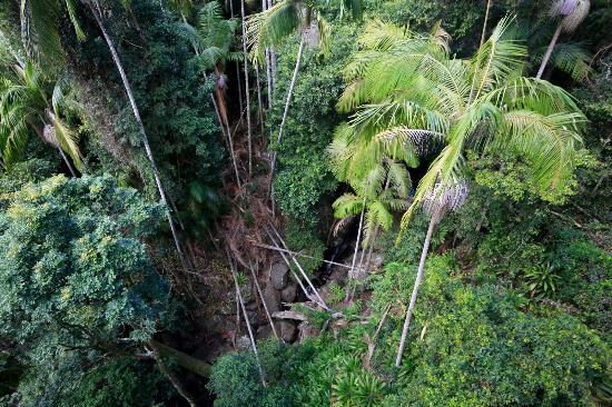 North Tamborine, Австралия: View down from Tamborine Rainforest Skywalk