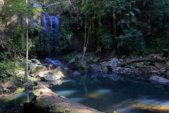 Mount Tamborine, Australia: Curtis Falls