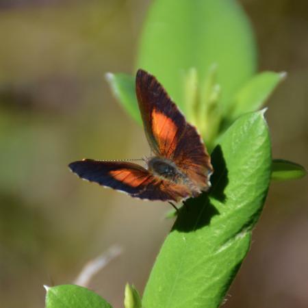 North Tamborine, Австралия: Butterfly