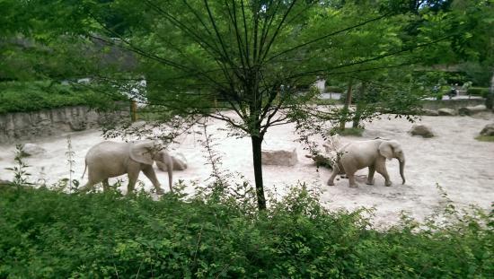Zlin, República Checa: slony opäť v akcii