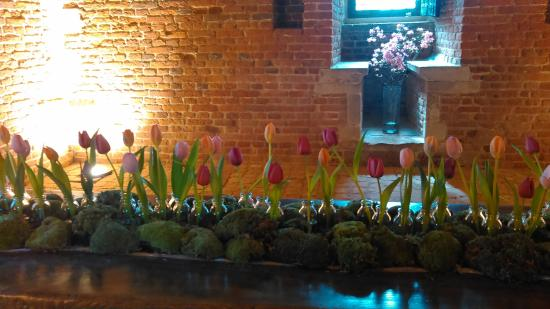 Groot-Bijgaarden, Βέλγιο: 花もあり