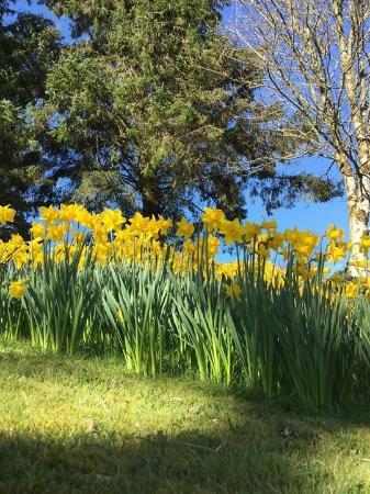 Spring is blooming......