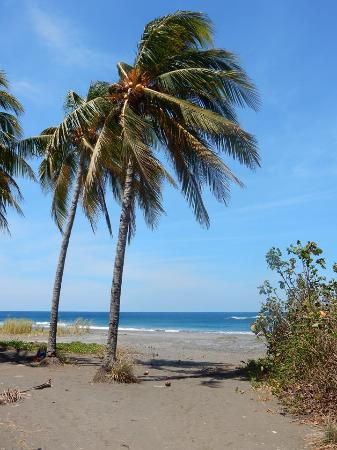 Playa Junquillal, Costa Rica: Gorgeous beaches!