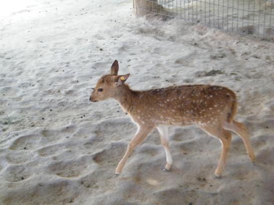 Litchfield Park, AZ: Wildlife World Zoo and Aquarium _ petting zoo