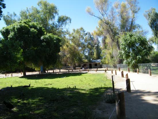 Litchfield Park, AZ: wallaby walkabout