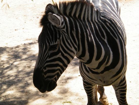 Litchfield Park, AZ: Wildlife World Zoo and Aquarium