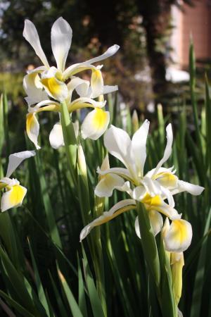 Immagini Di Fiori E Nomi.Giardino Curato Con Bellissimi Fiori E Nomi Delle Piante Molto