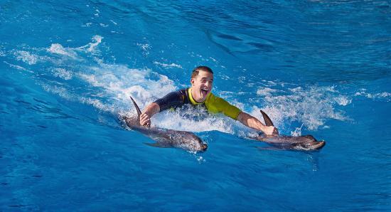 Atlantis, The Palm: Dolphin Bay - Royal Swim